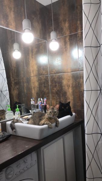 Добрый день!  Пишу сюда в надежде что, вы поможете найти нашу любимую кошку. Софи пропала 12 июля 2