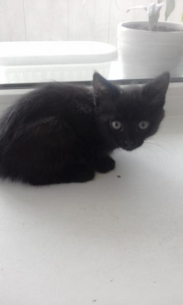 Эти котята находятся в Красноуфимске, район лесозавода - забирайте, отдаем в добрые и надежные руки
