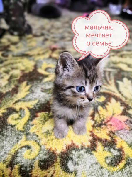 Отдадим котят в хорошие руки. Два маленьких комочка счастья нуждаются в доме. К сожелению у себя ост