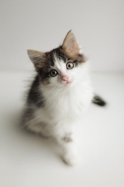 Отдадим только в Добрые руки!  Эти милые котятки ищут своих хозяев и свой дом!  1 девочка (первое