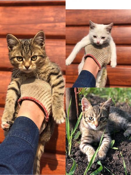 Отдам котят в хорошие руки. Белая девочка. Остальные мальчики