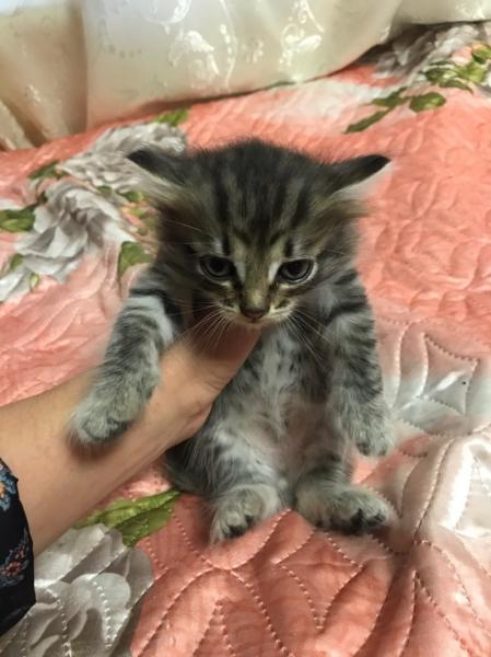 Отдам котят в хорошие руки, кушают сами, родились 22. 07. 2019
