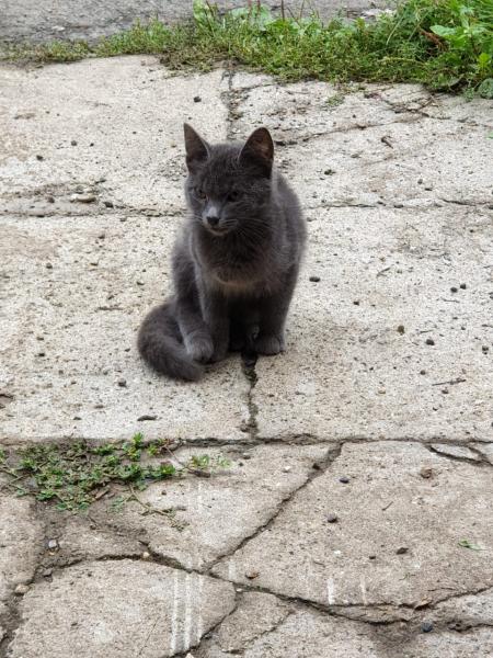 Отдам красивого, умного котика 4 мес. от кошки мышеловки! К лотку приучен, кушает все, не пакостит.
