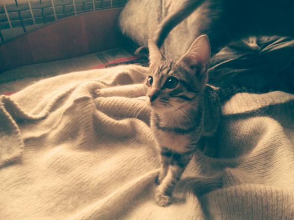 Отдам очень красивых и умных котят. срочно! Котята растут кормить уже не чем. Еды не хватает. Когда