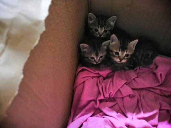 Отдам в добрые руки котят, остались девочка и мальчик. Нашли на улице в коробке, кто-то выкинул, а м