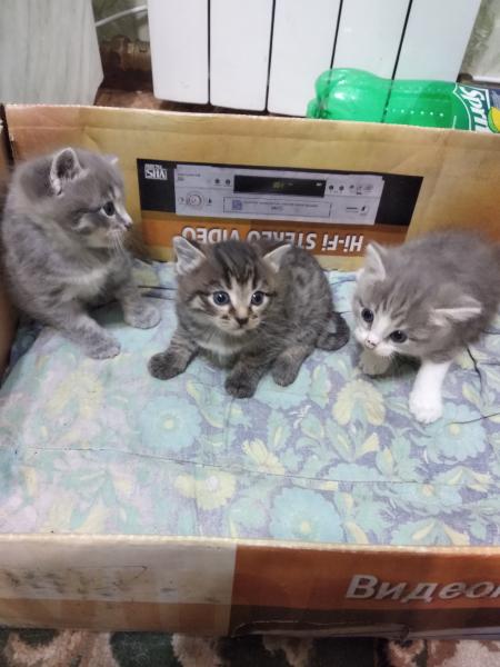 Отдам в хорошие руки котят -1 девочка, 2 мальчика