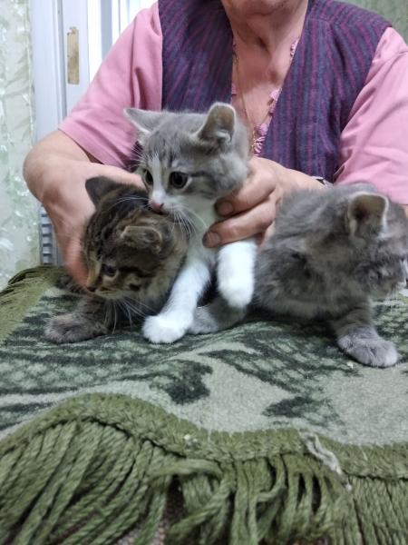 Отдам в хорошие руки котят - 2 девочки, 1 мальчик . Возраст 2 мес. , кушают самостоятельно