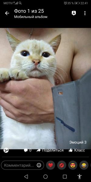 Потерялся кот в районе селекции прозьба кто видел или знает где находится просим сообщить либо верну