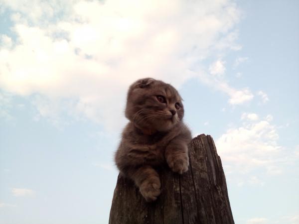Ушёл и не вернулся, 10. 09 потерялся веслоухий котейка по ул. Некрасова возле ж. д. поликлиники!